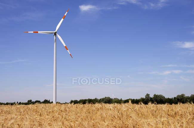 Германия, Северный Рейн-Вестфалия, ветер колесо и пшеница поле в sommer в дневное время — стоковое фото