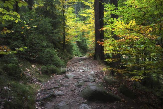 Poland, Sudetes, Karkonosze Mountains, Karkonoski National Park, mountain path in autumn forest — Stock Photo