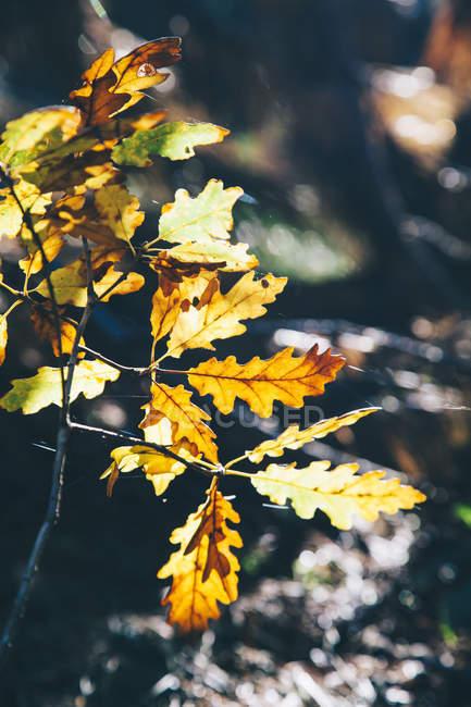 Осенние листья на открытом воздухе на размытие фона — стоковое фото