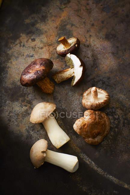 Bucht von Steinpilzen und König Trompete Pilze — Stockfoto