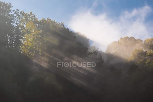 Германия, огонек тумана и деревьев в дневное время — стоковое фото