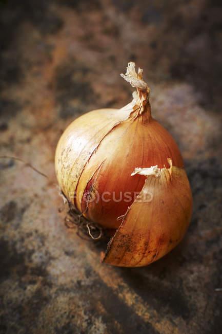 Cebola fresca orgânica — Fotografia de Stock