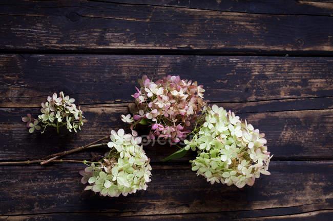 Flores de hortensias en la superficie de madera oscura - foto de stock
