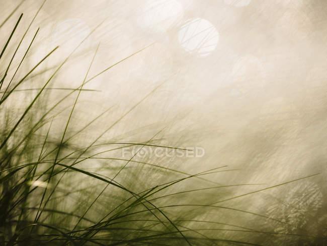 Vista de Gramíneas e reflexões de água — Fotografia de Stock