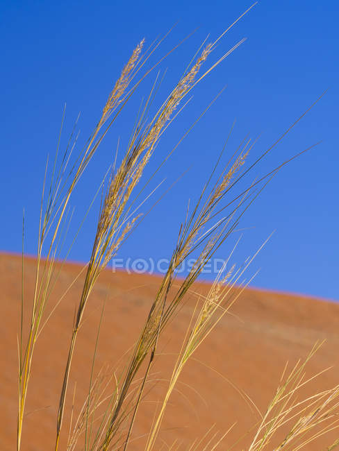 Намібія, Sossusvlei, піску, дюни і трав — стокове фото