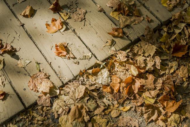 Foglie di autunno sul suolo e passerella in legno — Foto stock