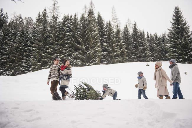 Dois casais e duas crianças, transportando a árvore de Natal na floresta de inverno — Fotografia de Stock