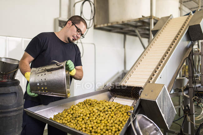 Worker in food processing plant pouring olives on conveyor belt — Stock Photo