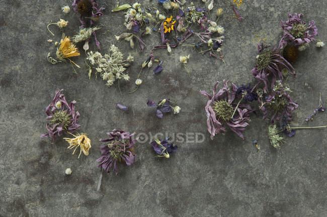 Vue de différentes fleurs fanées — Photo de stock