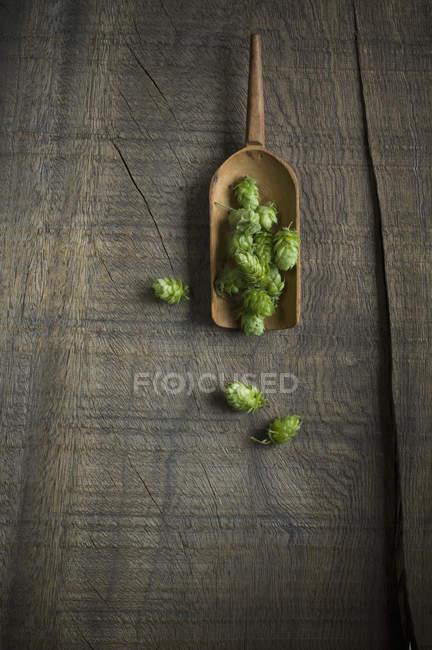 Hop e pá na superfície de madeira escura — Fotografia de Stock