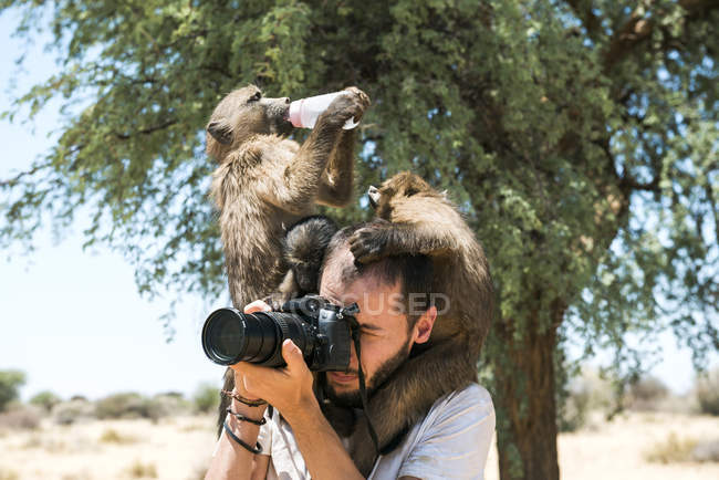 Namibia, photographer taking pictures with three baby baboons on shoulders — Stock Photo