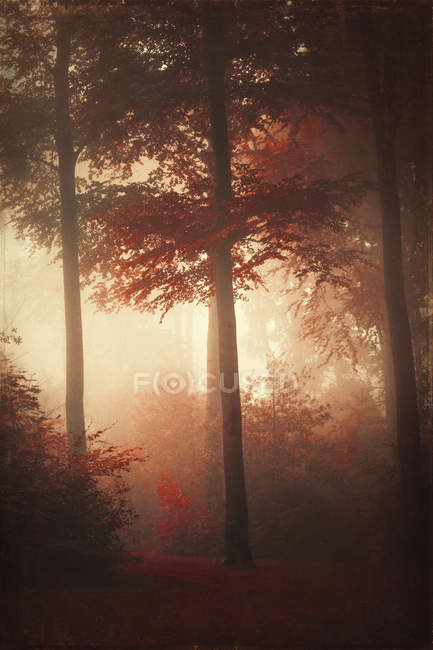 Forest in autumn, morning mist, textured effect — Stock Photo