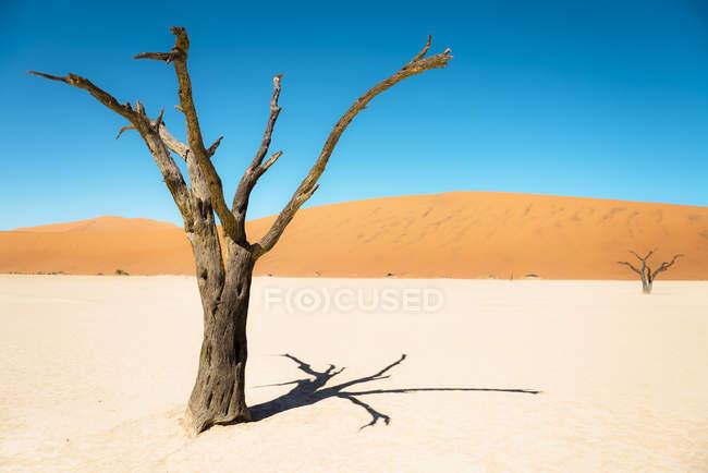 Namibie, Désert de Namib, arbres morts à Deadvlei — Photo de stock