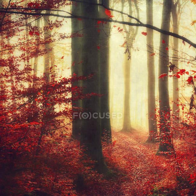 Floresta de outono com fundo amarelo desfocado — Fotografia de Stock