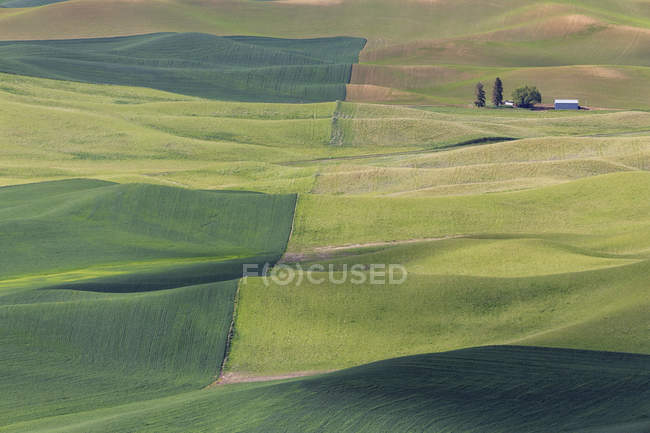 View to rolling landscape with wheat fields from Steptoe Butte, USA, Idaho, Palouse — Stock Photo