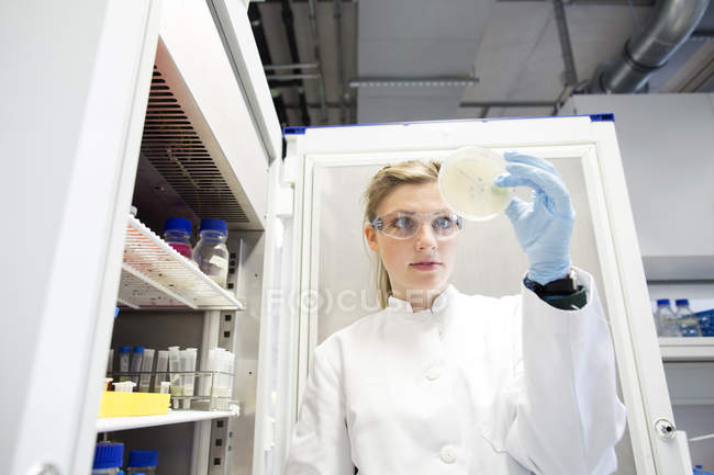 Young female scientist working at biological laboratory inspecting samples — Stock Photo