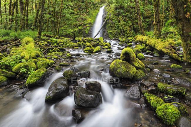 USA, Oregon, Hood River County, Columbia River Gorge, Ruckel Creek Falls — Stock Photo