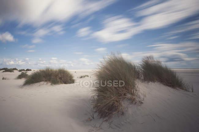 Германия, Amrum, Wittduen, пляж и дюны — стоковое фото