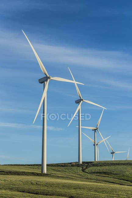 Spain, Andalusia, Tarifa, Wind farm on green field — Stock Photo