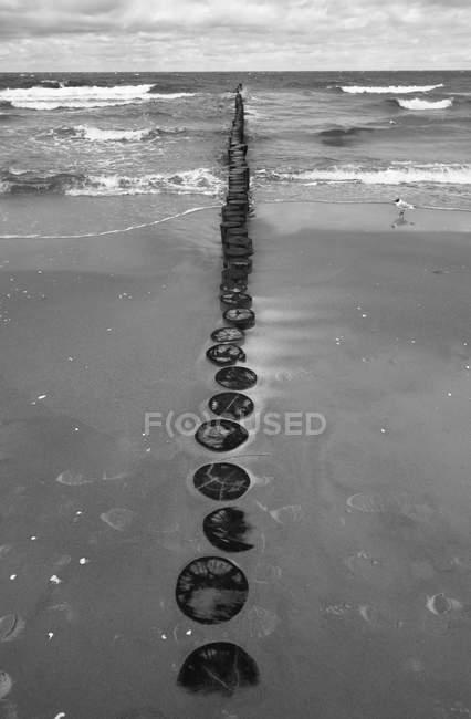 Breakwater e gabbiano sulla spiaggia — Foto stock