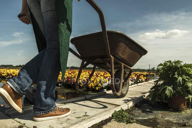 Woman pushing wheelbarrow — Stock Photo