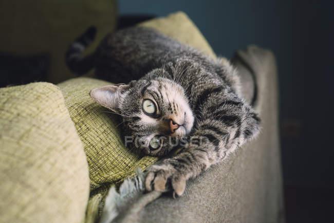 Расслабленный кот лежит на диване — стоковое фото