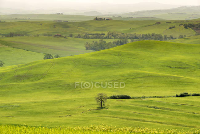 Italy, Tuscany, Val d'Orcia, rolling landscape — Stock Photo