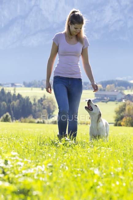 Austria, Mondsee, mujer enseñando Labrador Retriever en el prado alpino - foto de stock