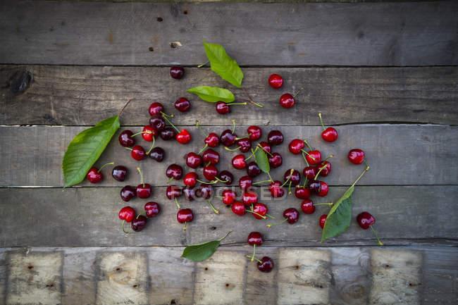 Organic cherries with leaves — Stock Photo