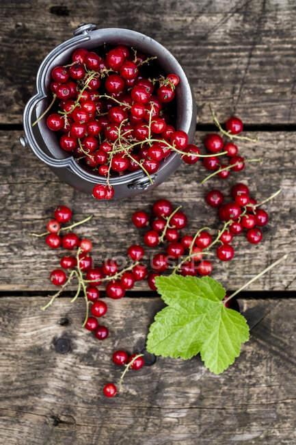 Свежей красной смородины в миске цинка — стоковое фото