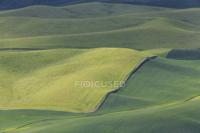 USA, Idaho, Palouse, view to rolling landscape with wheat fields — Stock Photo