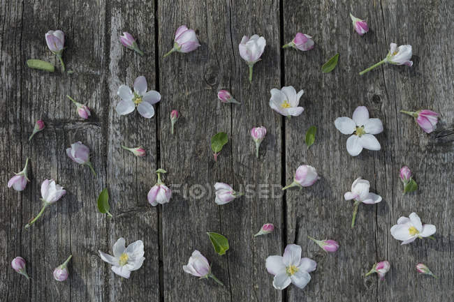 Apple blossoms on weathered wood — Stock Photo