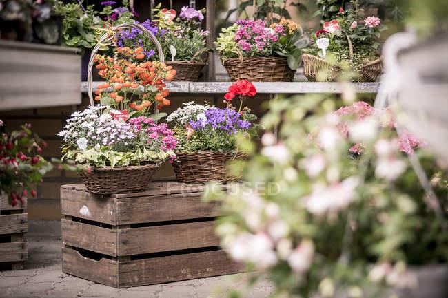 Alemanha, venda de flor de um viveiro de plantas — Fotografia de Stock