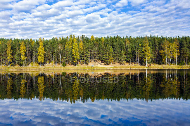 Estonia, Odri lake, trees reflecting on calm water — Stock Photo