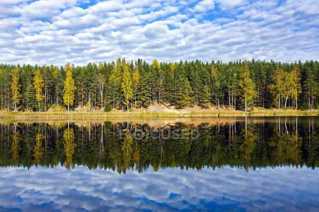 Эстония, Одри озеро, деревья, отражающие на спокойной воде — стоковое фото