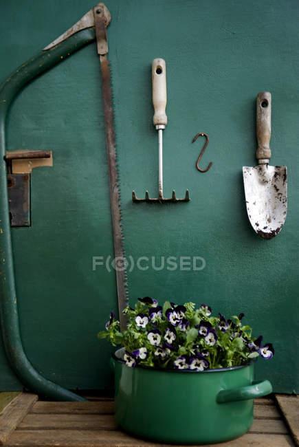 Pansies in enamel pot and gardening tools — Stock Photo
