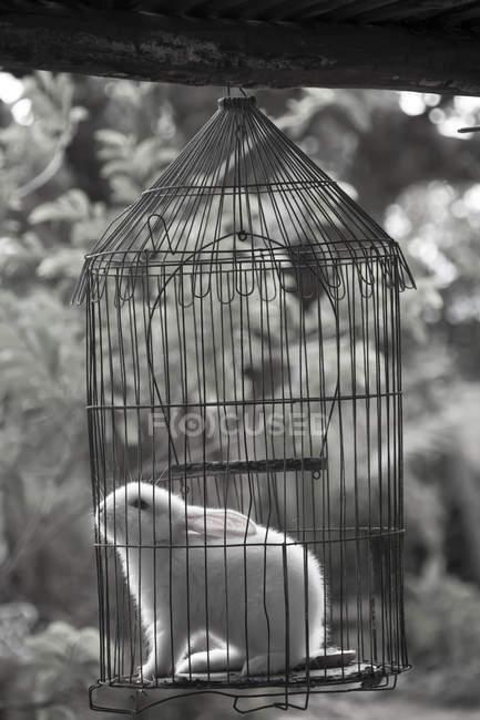 Cuba, Guanabo, rabbit in birdcage — Stock Photo