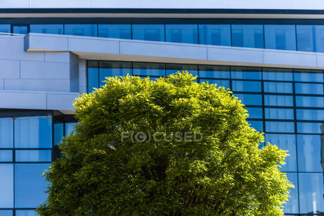 Ash tree in front of office building during daytime — Stock Photo