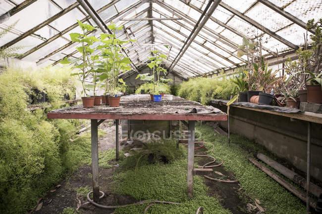 Grünpflanzen im Gewächshaus eine Gärtnerei — Stockfoto