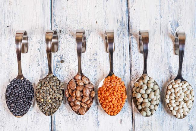 Filas de cucharas con diferentes legumbres secas - foto de stock