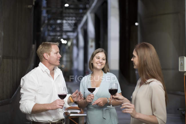 Три человека, дегустация вин в погребе, обсуждение — стоковое фото