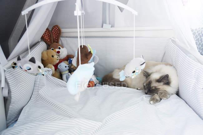 Gato acostado en cuna debajo de juguetes sobre la cama - foto de stock