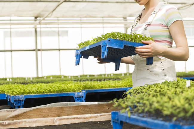 Young female gardener holding tray with potted plants in plant nursery — Stock Photo