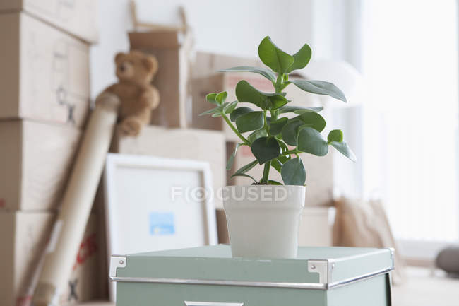 Piled cardboard boxes in flat, potted plant in foreground — Stock Photo