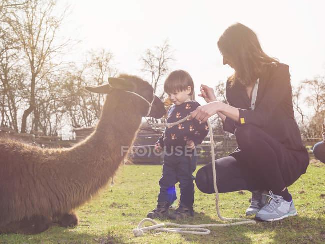 Mutter und kleiner Sohn spielen mit einem Lama auf der Koppel — Stockfoto