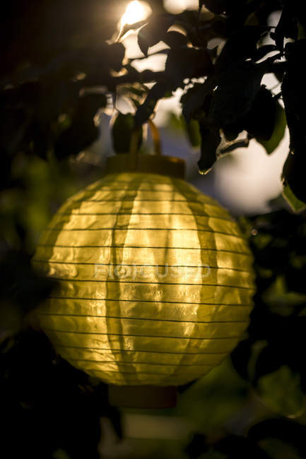 Lampion hanging in a tree at evening twilight — Stock Photo