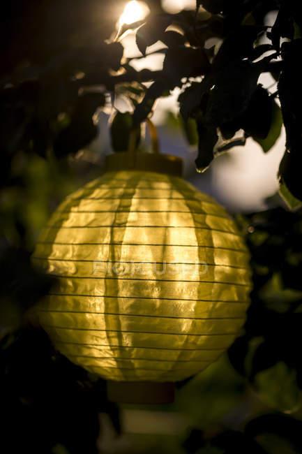 Lampion hängt in der Abenddämmerung in einem Baum — Stockfoto