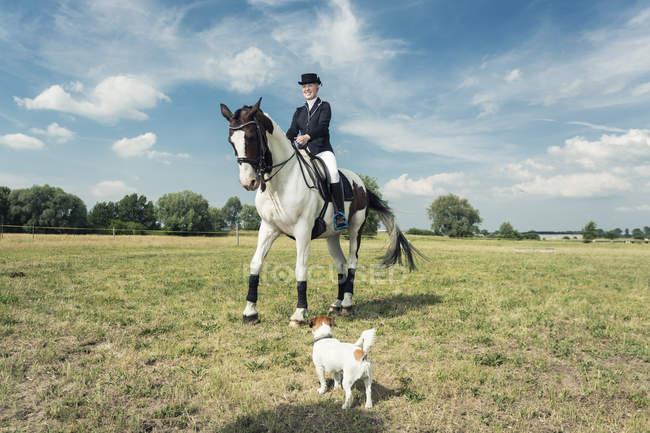 Всадник на коне с собачкой на переднем плане — стоковое фото