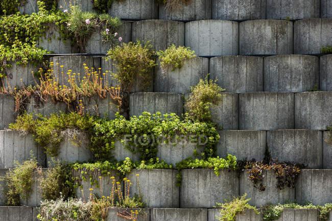 Germania baviera otterfing piante in giardino di pietra cemento