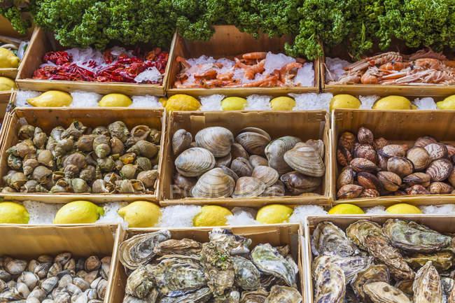 Vista del display con frutti di mare freschi — Foto stock
